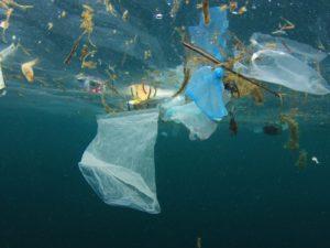 Plastic free ocean programma: ondernemers strijden tegen plasticvervuiling