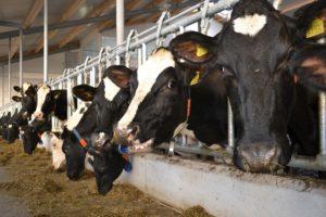 Minister Schouten wil omslag naar kringlooplandbouw nu inzetten