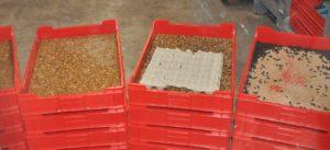 WUR onderzoekt samen met industrie voordelen dieet insectenlarven voor big, kuiken en milieu