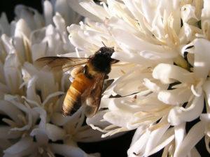 Nederland gaat achteruitgang van wilde bijen tegen