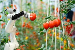 Van genome editing tot insecten: Duurzaam Voedselsysteem – en hoe daar te komen