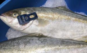 Good Fish Foundation (GFF) wil alleen goede vis op de kaart