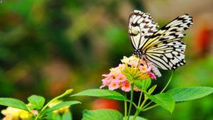 Keurmerk voor goed maaibeheer van bermen en groenstroken