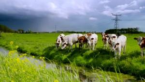 Minister Kamp van Economische Zaken: koken op koeienpoep