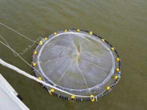 Testen zeewierkweek in de Eemshaven door North Seaweed en CIV Offshore & Shipping