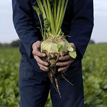 AkzoNobel en Royal Cosun: duurzame celluloseproducten uit verwerking suikerbieten