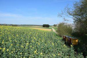Landbouwer, help de bijen, zonder omgooien bedrijfsvoering