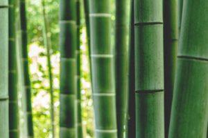 Bamboe als duurzaam alternatief voor de textielindustrie?
