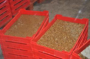 Koning Willem-Alexander opent grootste, meest geavanceerde insectenkwekerij ter wereld van Protix