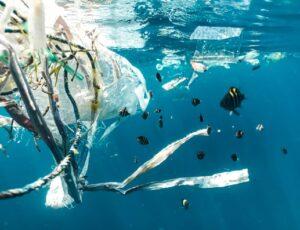 Deze Haagse kunstenares maakt nieuwe kunstzinnige producten van afval en zeewierresten uit de oceaan