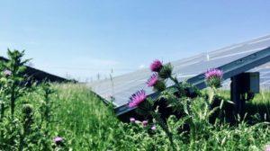 Zonnepark Vierverlaten paradijs voor insecten