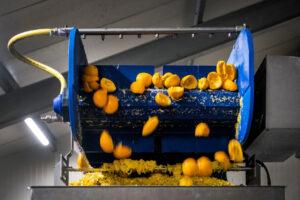 Miljoenen sinaasappelschillen krijgen tweede leven bij Jumbo