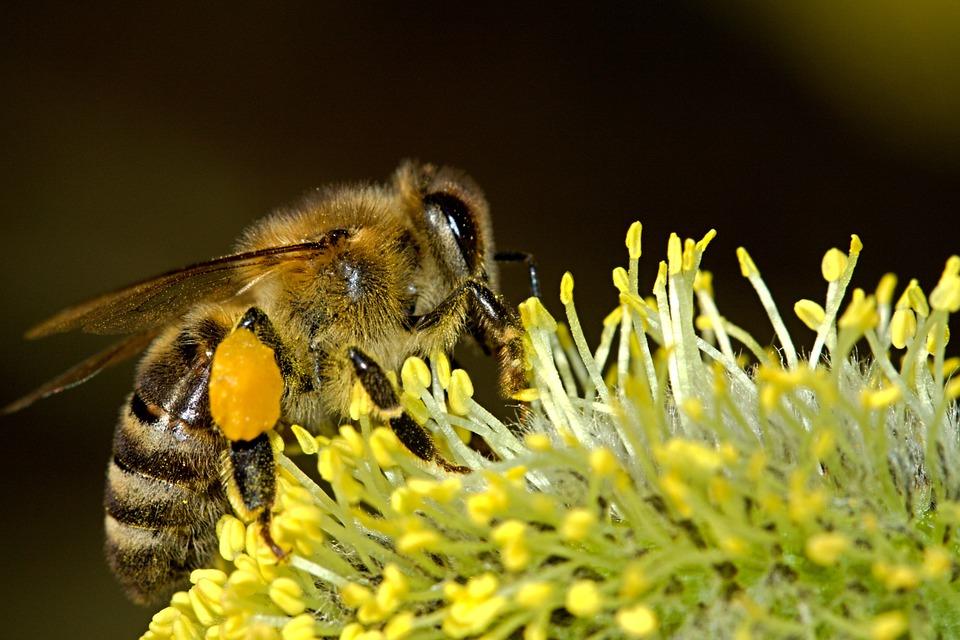bijen en hommels 2