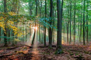 Staatsbosbeheer werkt aan beter klimaat en mooier landschap