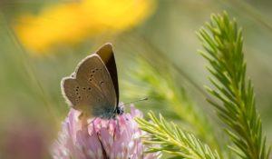 Naturalis en Albert Heijn onderzoeken samen biodiversiteit