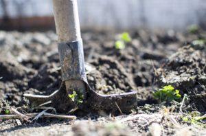 Green Deal Voedselbossen ondertekent door Gedeputeerde Staghouwer