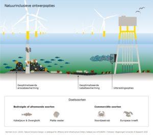 Nieuwe catalogus voor ontwerp van natuurinclusieve offshorewindparken