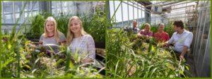 vegetatiematten zuiveren erfafspoelwater: moerasdakproject in volle bloei