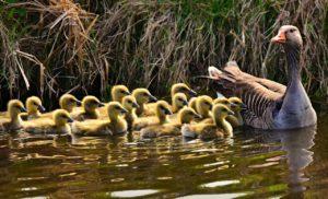 Provincies en natuurorganisaties: investeren in natuur noodzakelijk