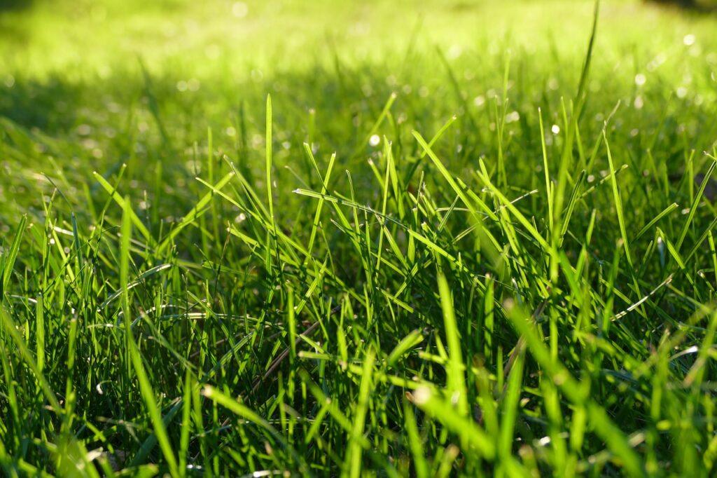 Grasvelden