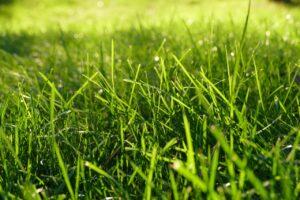 Nieuw onderzoek Grasvelden voor klimaatbestendige leefomgeving