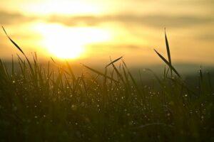 Gemaaid gras: Schiphol en ECORⓇ maken er producten van