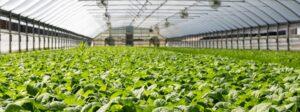 Tuinders in West-Brabant willen 100.000 ton CO2 per jaar besparen