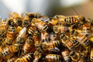 Zonneparken worden bijenparken. Unieke kruisbestuiving bijenhouders en projectontwikkelaar