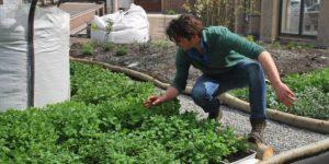Wibautstraat krijgt proeftuin voor groene daken