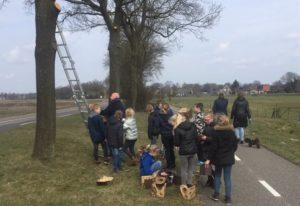 Bij bestrijding eikenprocessierups nestkastjes ingezet door provincie Drenthe