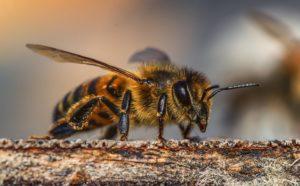 Bijenlandschap in de Groene Vinger in Alphen aan den Rijn aangelegd en geopend