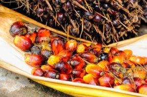 Palmolie Scorecard: internationale bedrijven schieten nog steeds tekort