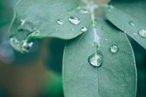 PWNergy-programma: vol energie naar duurzaam drinkwater en natuur in topvorm