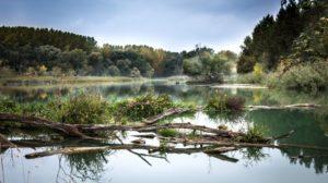 Eerste rivierhout in de Grensmaas geplaatst