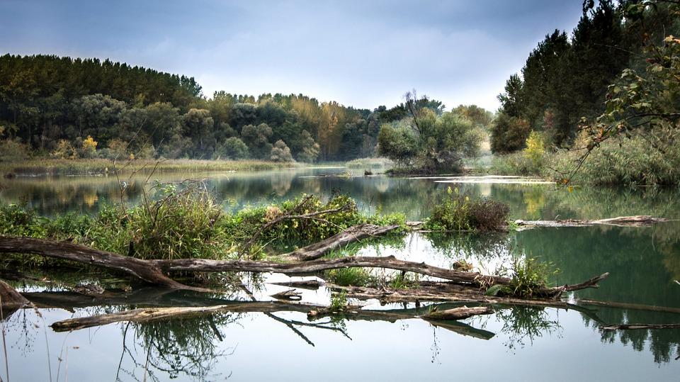 rivierhout