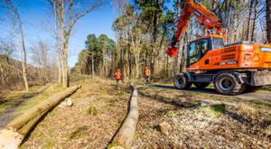 Uniek in Nederland: windmolens in bos