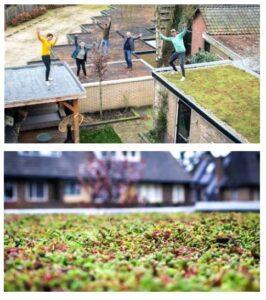 Groene daken belangrijk bij het bestrijden van wateroverlast