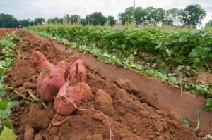Een gezonde bodem voor gezondere landbouw en gezonde mensen