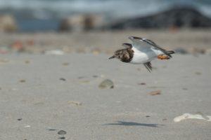 RUG onderzoekt plasticvervuiling containerramp op Schiermonnikoog