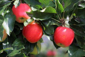 Vijf nieuwe voedselbossen in de provincie Noord-Brabant