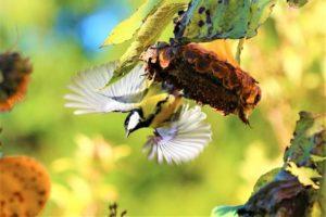 Vogelbescherming: roep gemeenten op biodiversiteit in te zetten in bestrijding eikenprocessierups