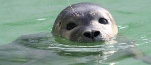 """Zeehondencentrum Pieterburen recycled visnetafval """"Duik de Noordzee Schoon"""""""