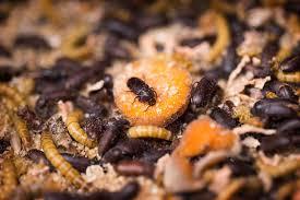 insecten1