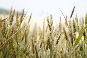 Natuurherstel en duurzaam landbeheer kan een belangrijke bijdrage leveren aan duurzame ontwikkeling op mondiaal niveau